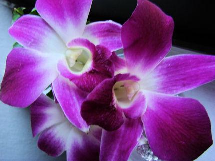 Orquídeas de Thai Airways.